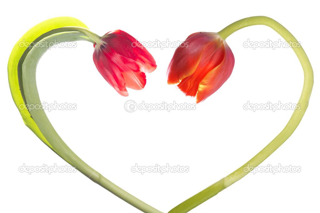 Flor En Forma De Corazón En Forma De Tulipán Flor Forma Corazón