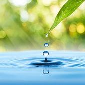 Fotografia goccia dacqua da verde foglia