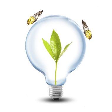 Light Bulb, plant and butterflies