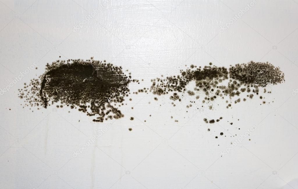 Black Mold on a wall