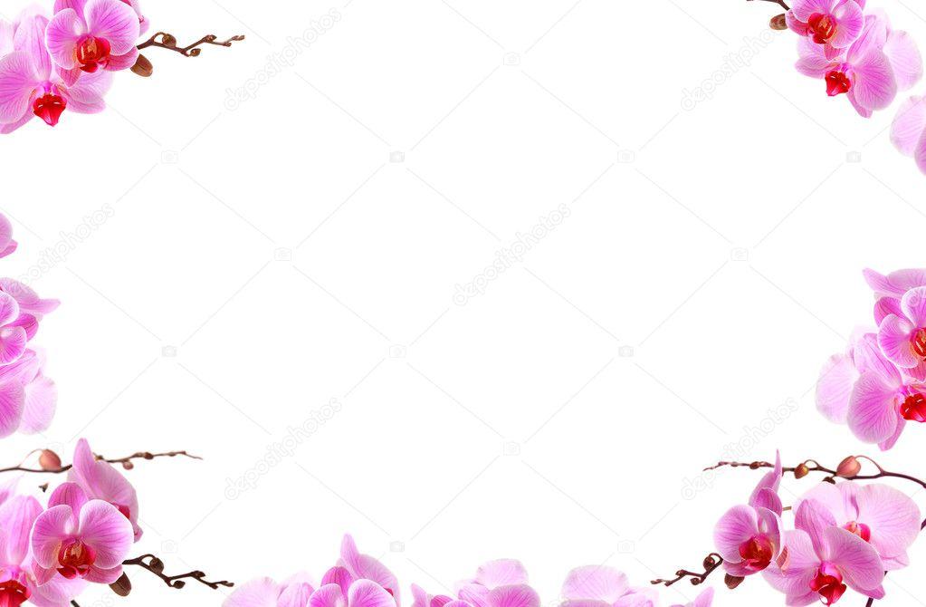bordure de fleurs d 39 orchid es avec espace copie blanche photographie strixcode 29726369. Black Bedroom Furniture Sets. Home Design Ideas