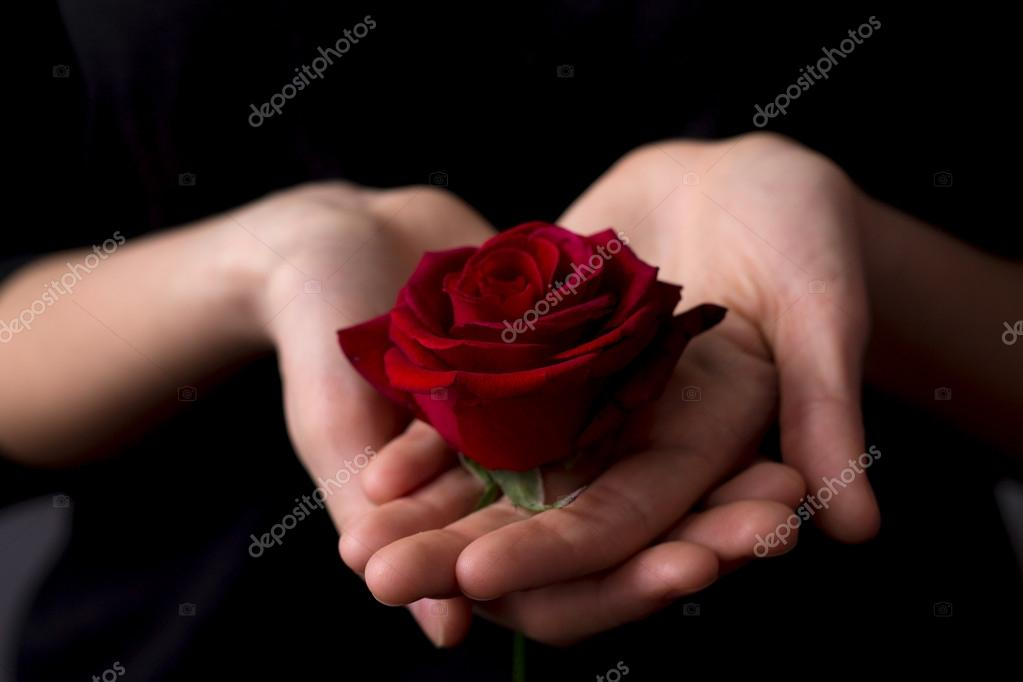 beautiful red rose on the girl's hand on a black background