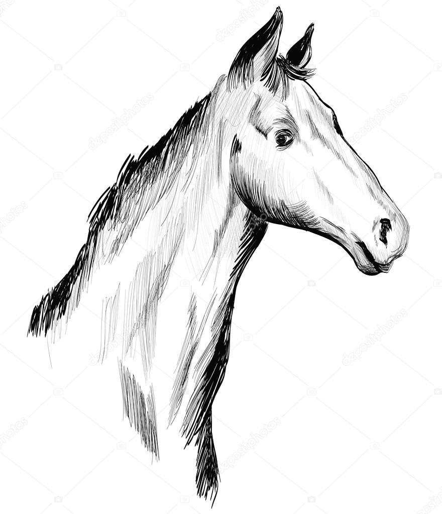 Hlava Kone Kresba Rukou Vektorove Ilustrace Stock Vektor