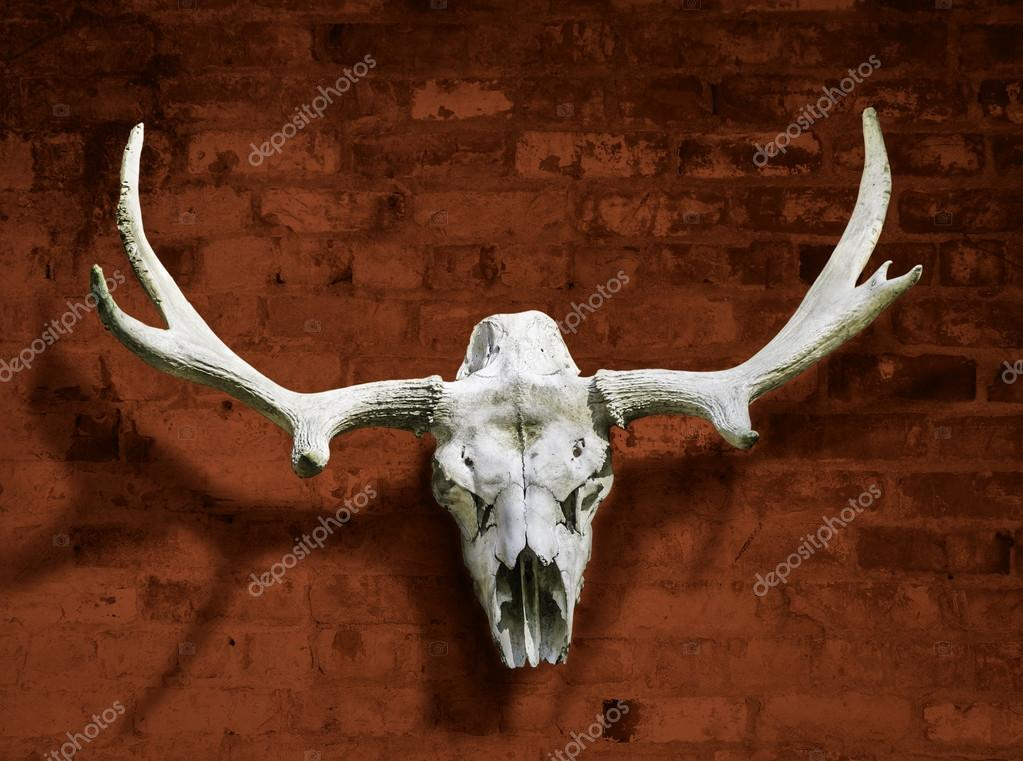 Moose skull with horns against the brick wall