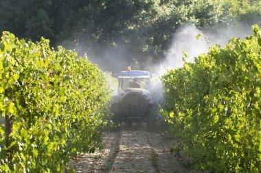 Tractor Spraying in Vineyard