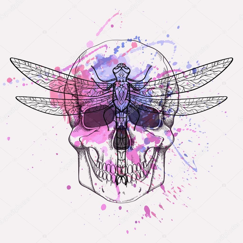 Vector grunge ilustración del cráneo humano y libélula con acuarela ...