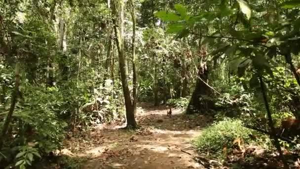 29d374a5391bfa Foresta pluviale amazzonica in Perù — Video Stock © w-chris #38993817