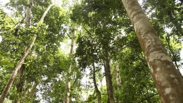 fcd6272608e403 Foresta pluviale amazzonica in Perù — Video Stock © w-chris #38994343