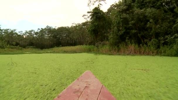 f4728292f6820d Gita in barca al fiume del amazon — Video Stock © w-chris #38994451