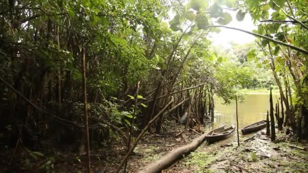 78cd000635595e Foresta pluviale amazzonica in Perù — Video Stock © w-chris #38998213