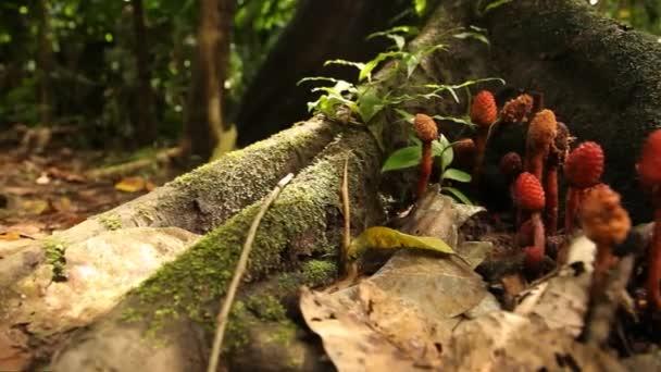 2883a6aa03b9ed Foresta pluviale amazzonica in Perù — Video Stock © w-chris #38998477