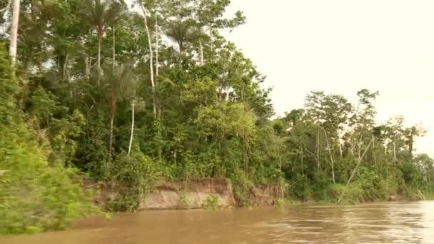 baa25f557bebb2 Video royalty-free simili: Gita in barca al fiume del amazon Filmato Stock