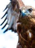 vogel von beute