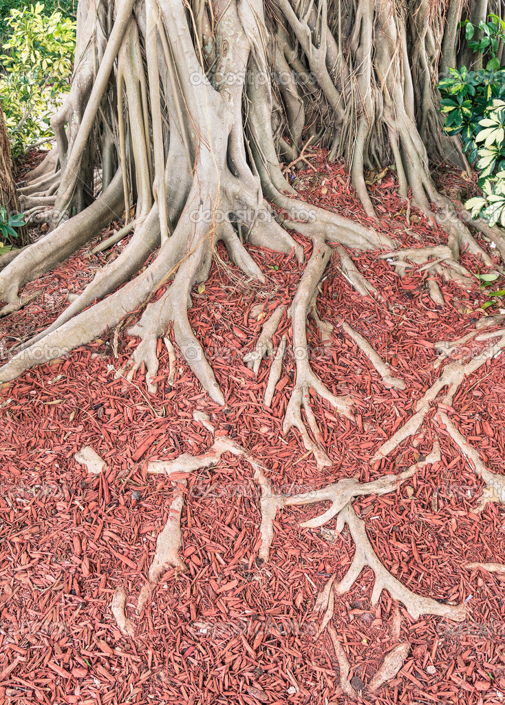 Tree Roots with unique red floaring