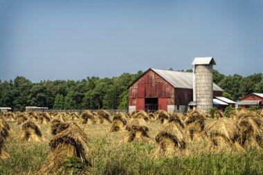 Amish Wheat Stacks