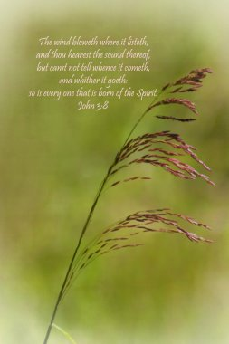Wind of Holy Spirit Grasses Analogy