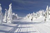 Běžecké lyžařské stopy