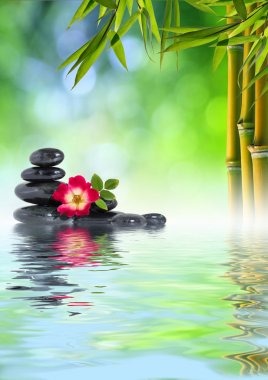 Rose, stones and bamboo on water