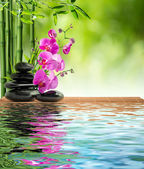 Fotografie Pink orchid black stone and bamboo on water