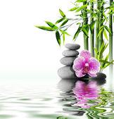 Fotografie fialová orchidej květina konec bambus na vodě
