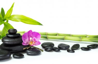 Purple orchid with bamboo and row stones