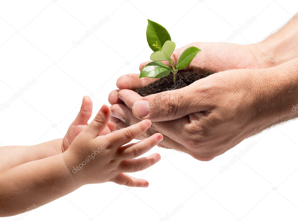 Hands of a child taking a plant from the hands of a man - white background