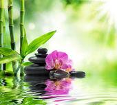 pozadí spa - fialové orchideje černé kameny a bambus na vodě