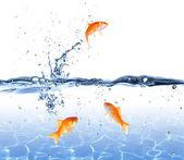 Fotografie Goldfische springen aus dem Wasser - Escape-Konzept
