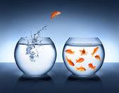 Fotografie Goldfische springen aus dem Wasser - Konzept des Bündnisses