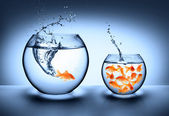 jumping zlatá rybka - zlepšení koncepce