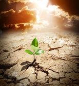 завод в посушливих земель - клімату потепління і посуха концепції