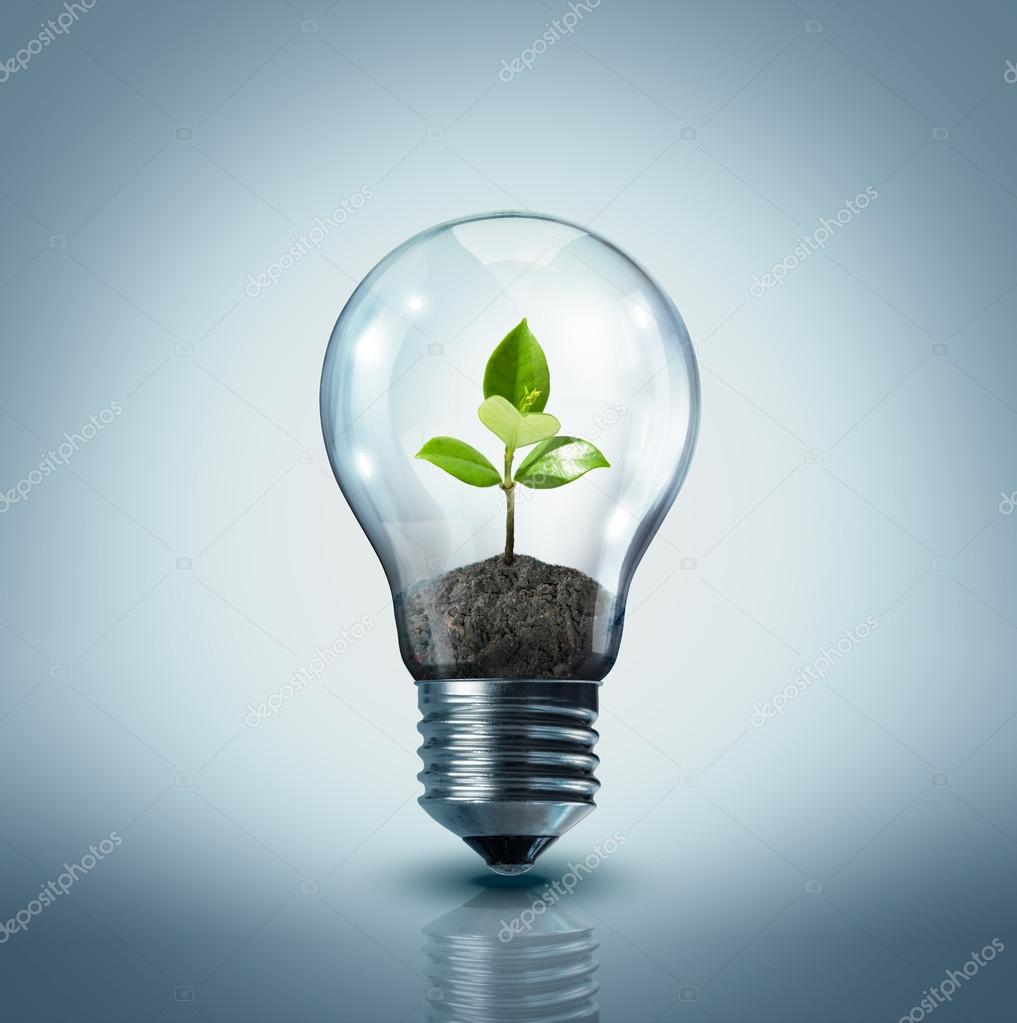 Ecological idea - plant in lamp