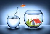 Fotografie ryby najít dům - realitní koncept