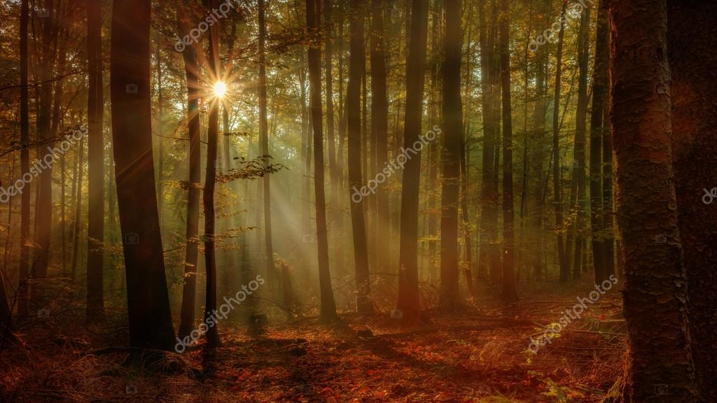 Enchanted Autumn Forest with the lovely rising morning sun