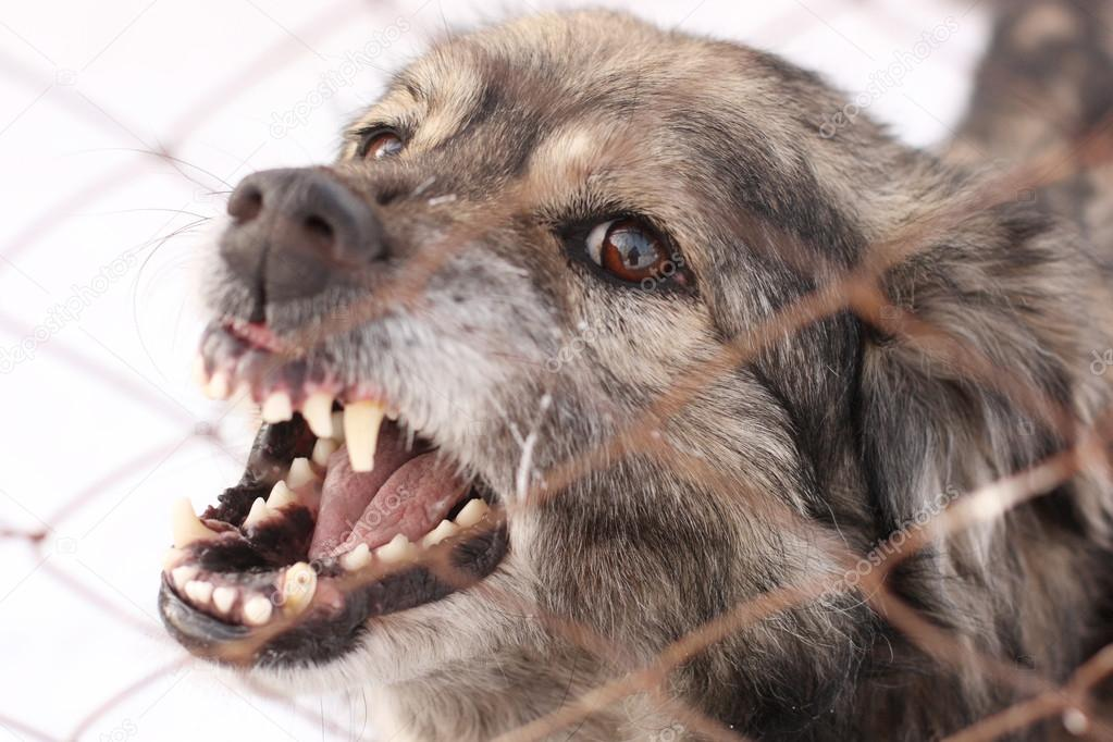 Angry barking dog in a steel cage