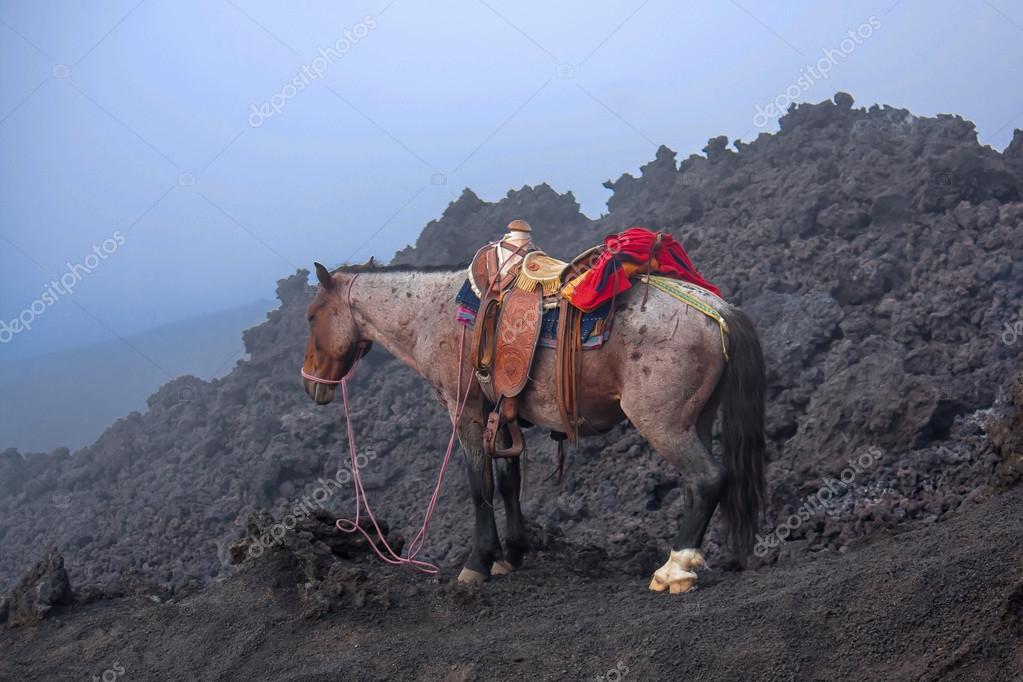 Horse on Pacaya Volcano Guatemala