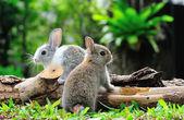 Photo Rabbit