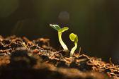 Mladá rostlina
