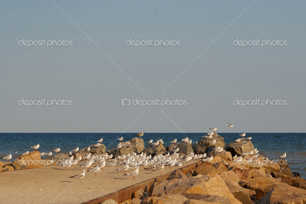 Seagulls over the beach at sunset