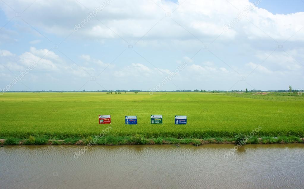 Green rice field, ditch at Mekong Delta