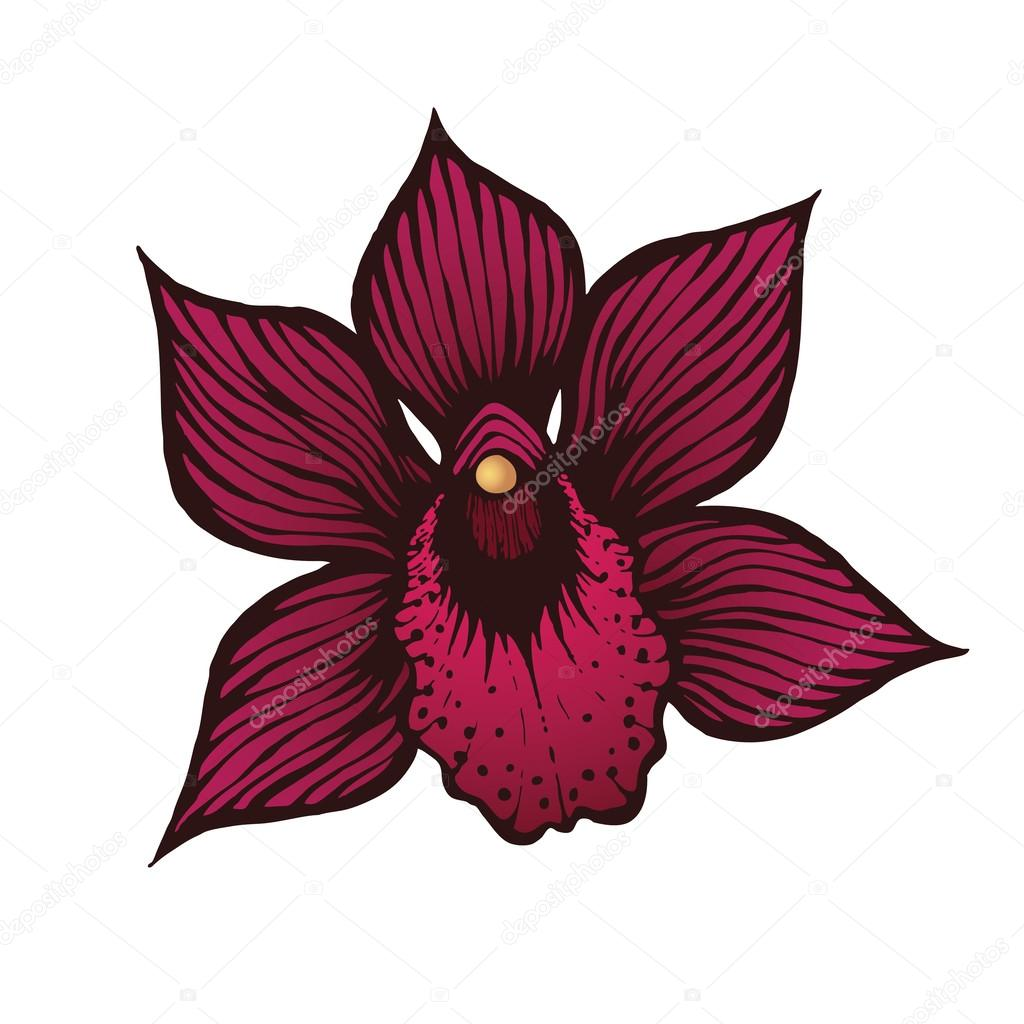 Hand Drawn Orchid Flowers Premium Vector
