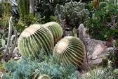 Fotografie kaktus ve skleníku