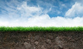 Photo Soil and Grass in Blue Sky