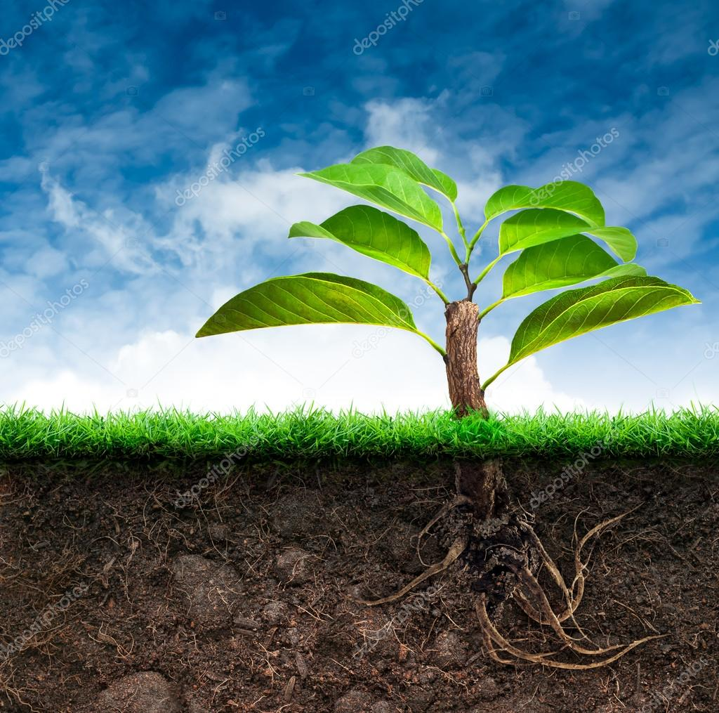 Origin Tree and Soil with Grass in Blue Sky