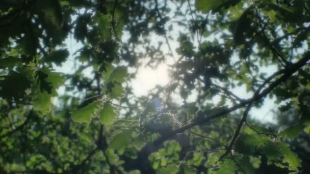 věrný sluníčko přes listy