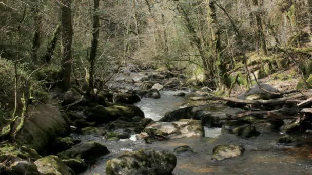 ογκόλιθος γεμάτο δάσος του ποταμού