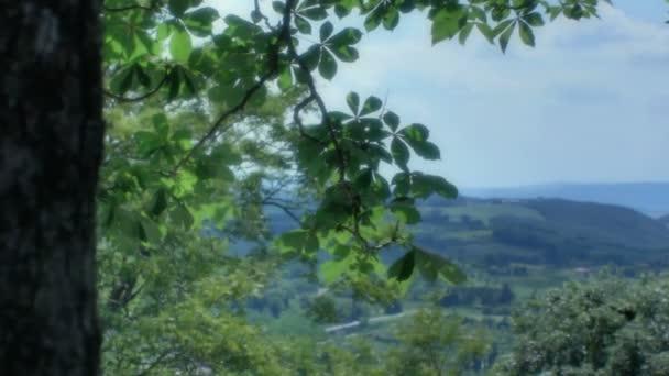 rivelando un paesaggio toscano da dietro un albero