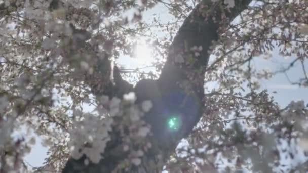 jarní Kvetoucí strom sluníčko přírodní výskyt závoje