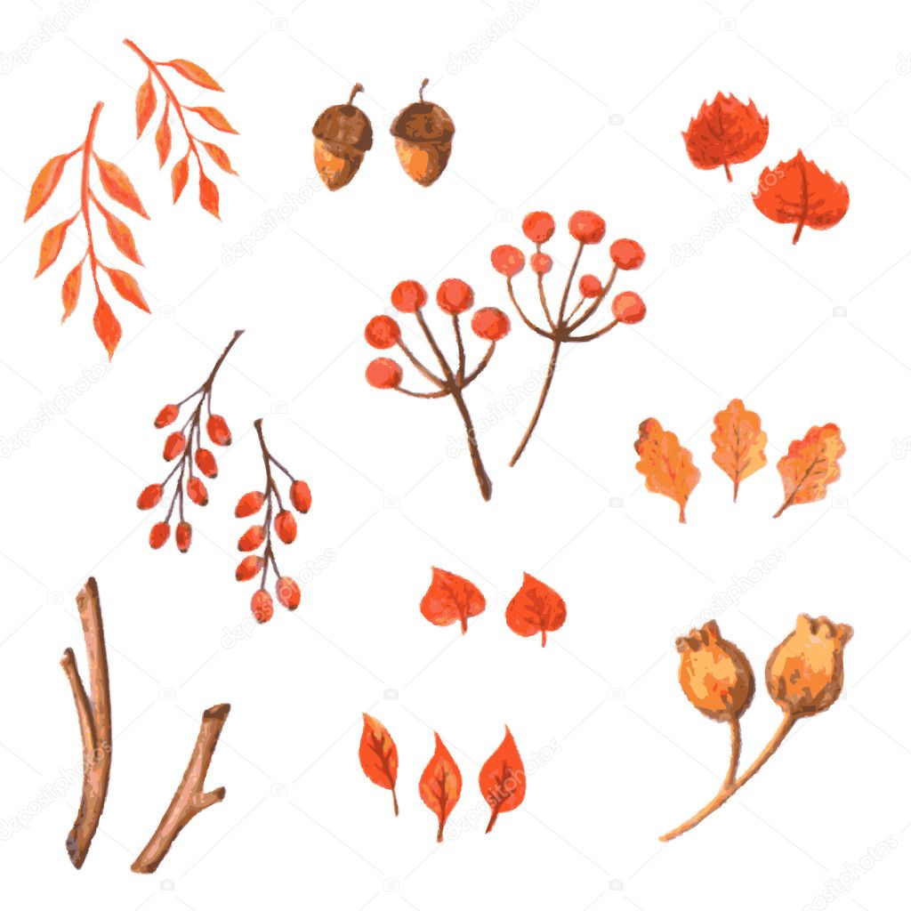 Set of watercolor autumn elements. Hand drawn leaves, acorns and berries can be used for printing onto fabric and paper or scrap booking.