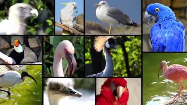 Portraits of birds, collage